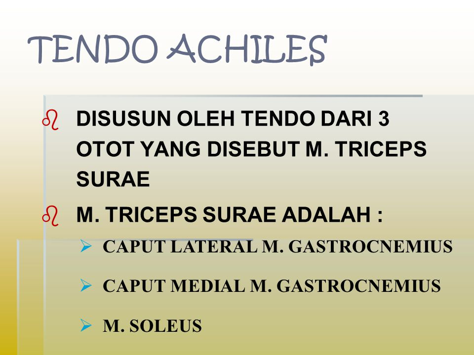 TENDO ACHILES DISUSUN OLEH TENDO DARI 3 OTOT YANG DISEBUT M. TRICEPS SURAE. M. TRICEPS SURAE ADALAH :