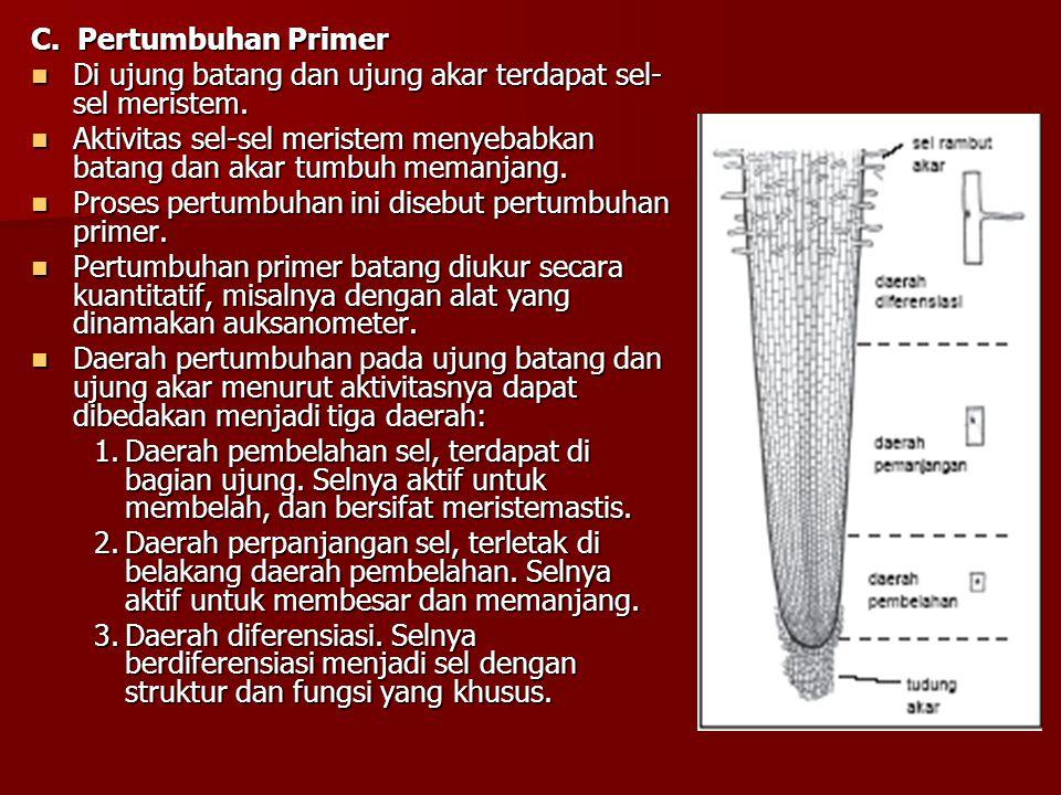 C. Pertumbuhan Primer Di ujung batang dan ujung akar terdapat sel- sel meristem.