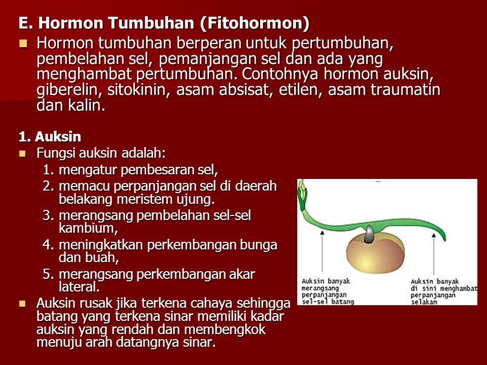 E. Hormon Tumbuhan (Fitohormon)
