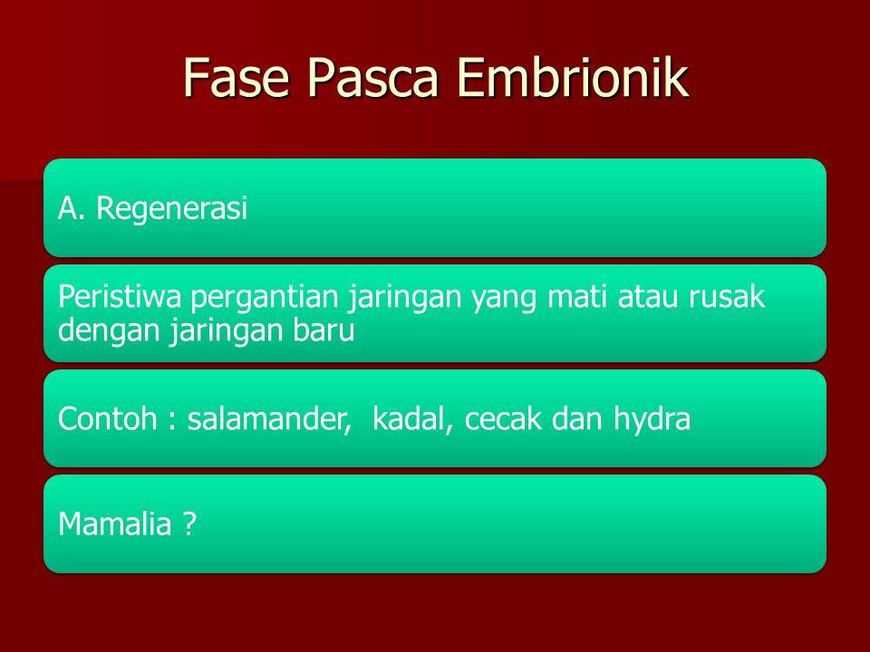 Fase Pasca Embrionik A. Regenerasi