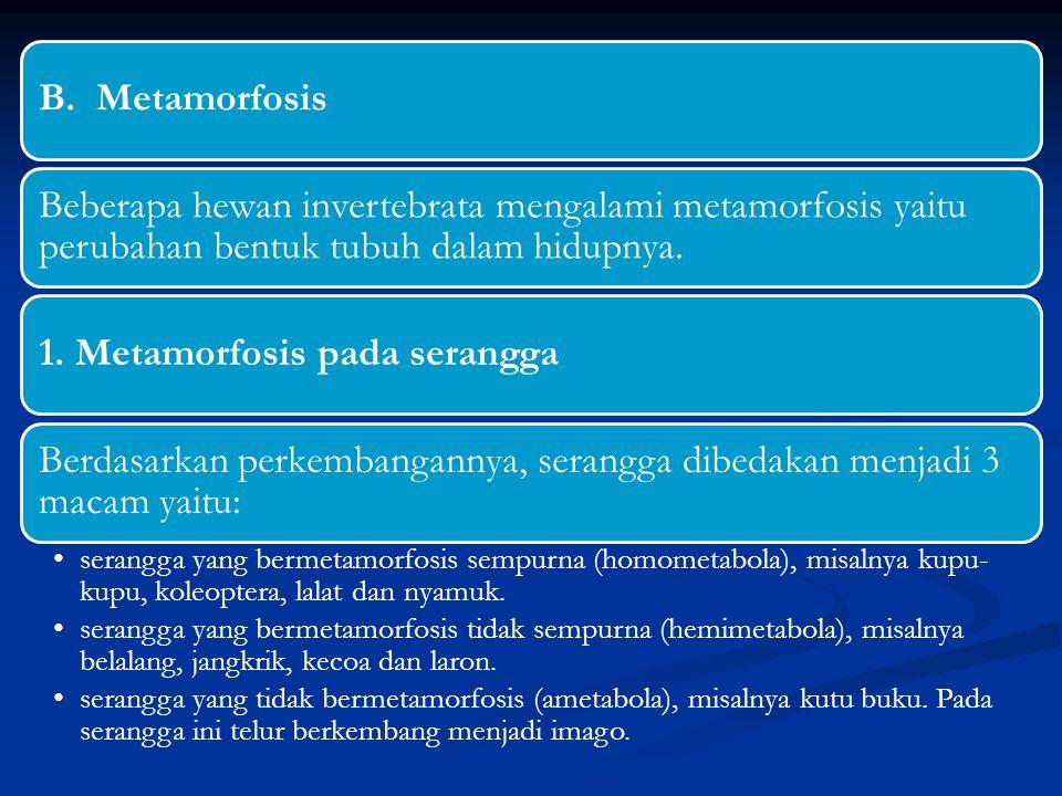 1. Metamorfosis pada serangga
