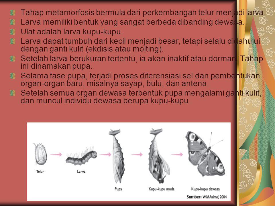 Tahap metamorfosis bermula dari perkembangan telur menjadi larva.