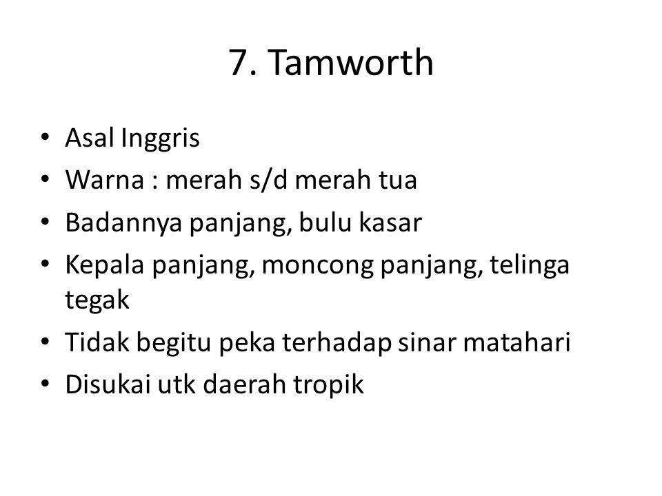 7. Tamworth Asal Inggris Warna : merah s/d merah tua