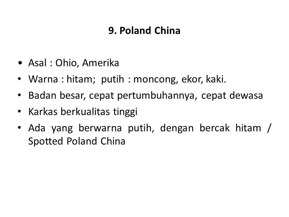 9. Poland China Asal : Ohio, Amerika. Warna : hitam; putih : moncong, ekor, kaki. Badan besar, cepat pertumbuhannya, cepat dewasa.