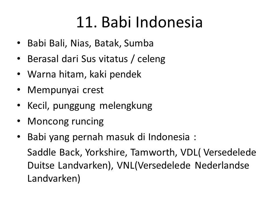 11. Babi Indonesia Babi Bali, Nias, Batak, Sumba