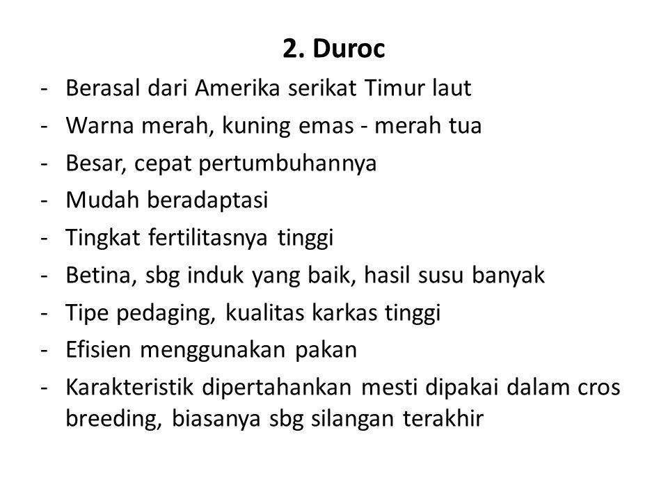 2. Duroc Berasal dari Amerika serikat Timur laut