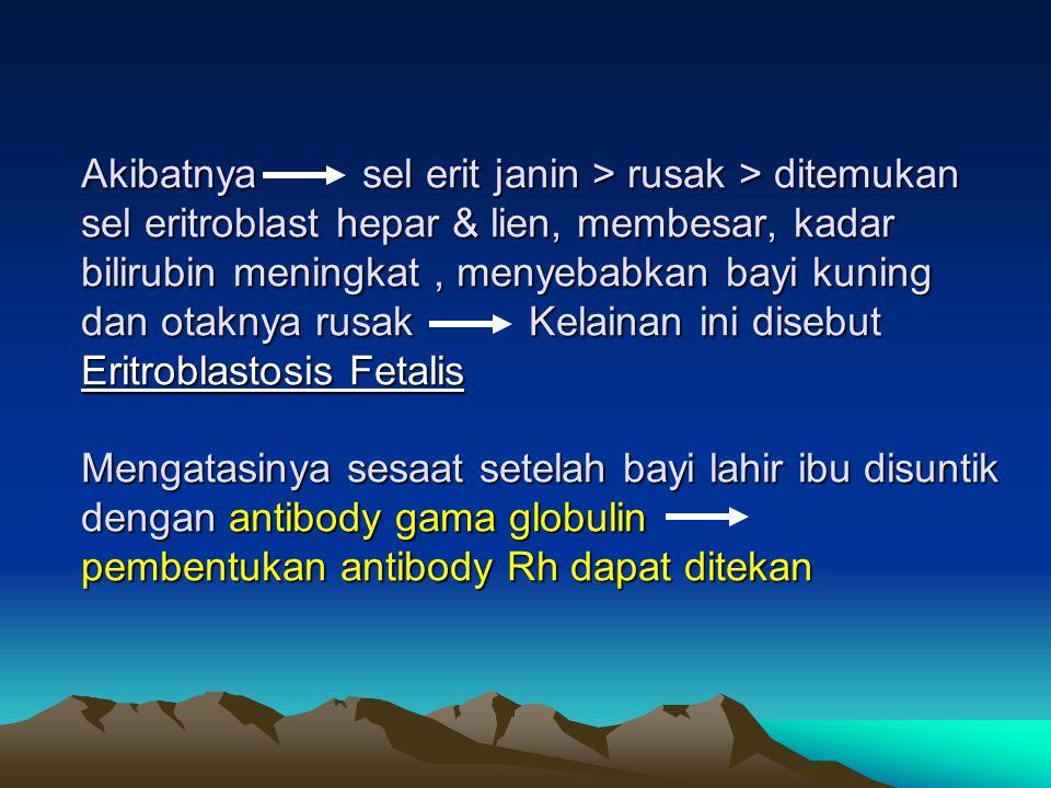 Akibatnya sel erit janin > rusak > ditemukan sel eritroblast hepar & lien, membesar, kadar bilirubin meningkat , menyebabkan bayi kuning dan otaknya rusak Kelainan ini disebut Eritroblastosis Fetalis Mengatasinya sesaat setelah bayi lahir ibu disuntik dengan antibody gama globulin pembentukan antibody Rh dapat ditekan