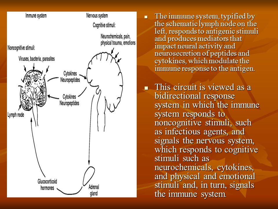The immune system, typified by the schematic lymph node on the left, responds to antigenic stimuli and produces mediators that impact neural activity and neurosecretion of peptides and cytokines, which modulate the immune response to the antigen.