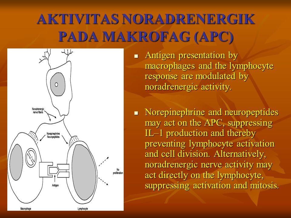AKTIVITAS NORADRENERGIK PADA MAKROFAG (APC)