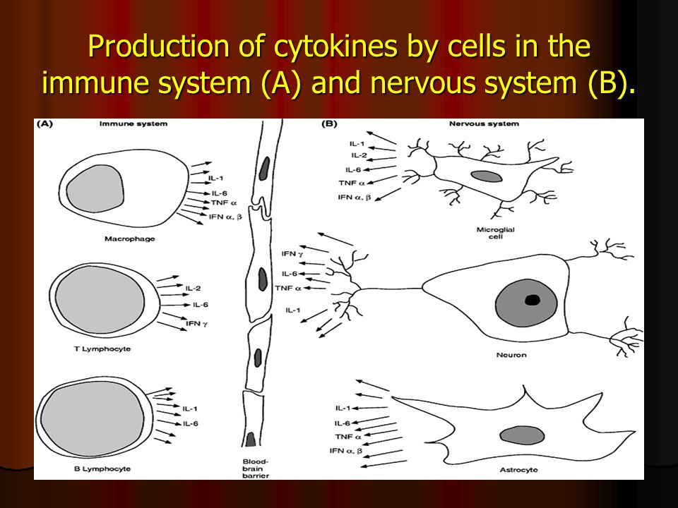 Production of cytokines by cells in the immune system (A) and nervous system (B).