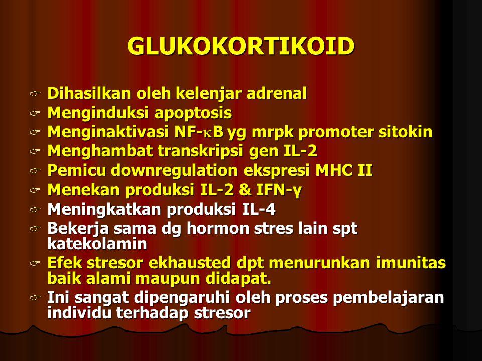 GLUKOKORTIKOID Dihasilkan oleh kelenjar adrenal Menginduksi apoptosis
