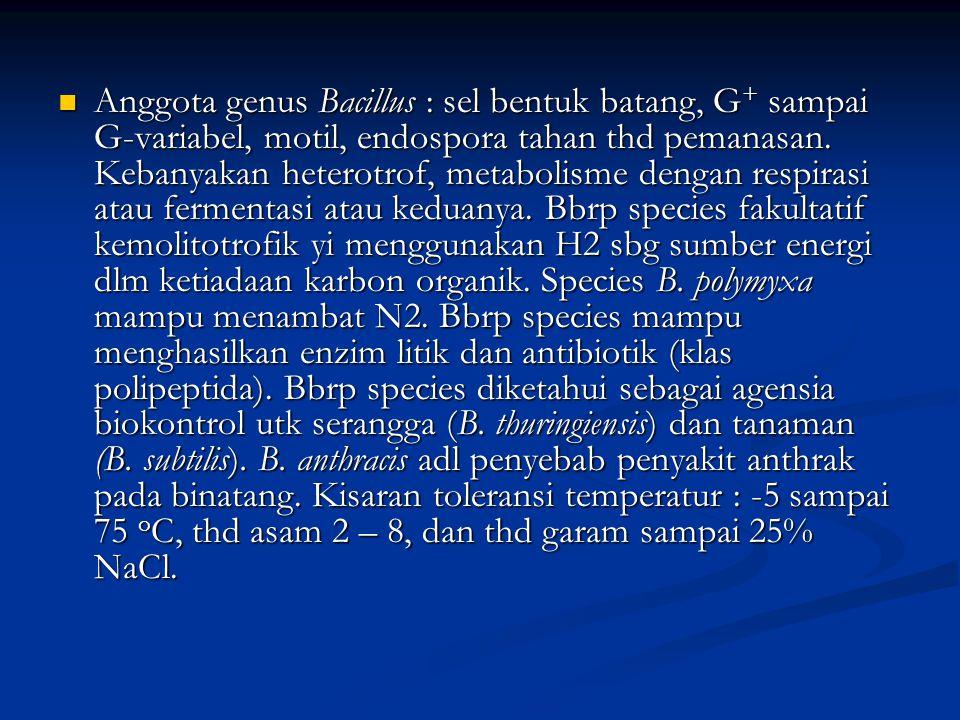 Anggota genus Bacillus : sel bentuk batang, G+ sampai G-variabel, motil, endospora tahan thd pemanasan.