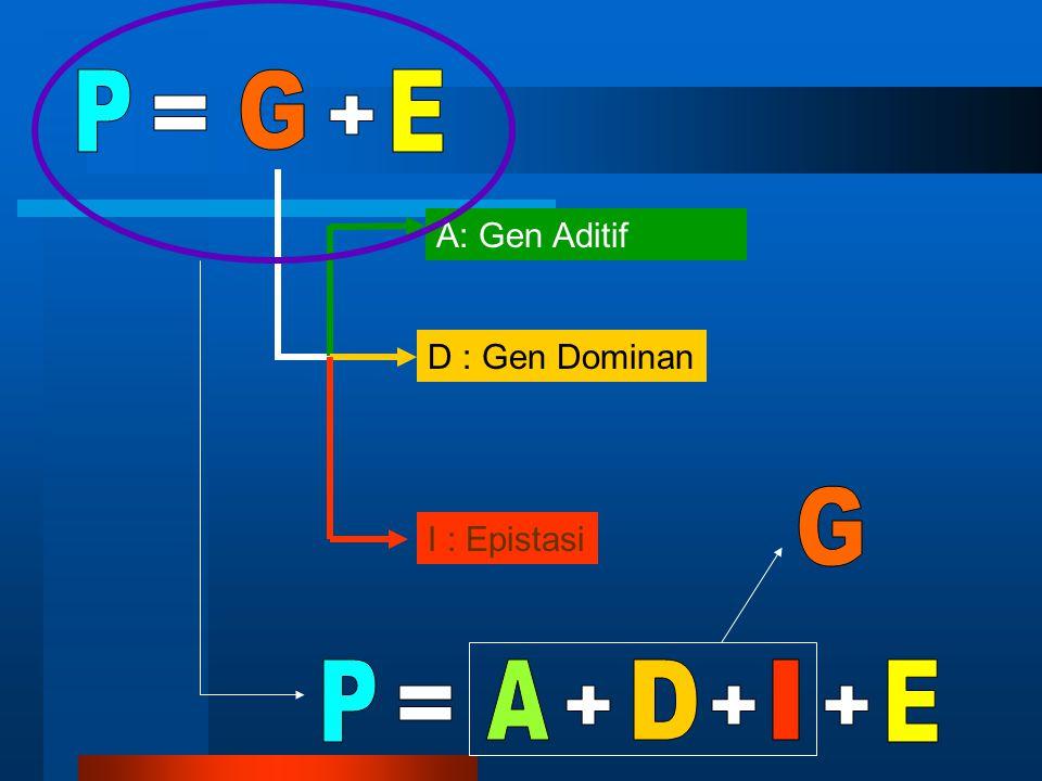 P G E = + G P A D I E = + + + A: Gen Aditif D : Gen Dominan