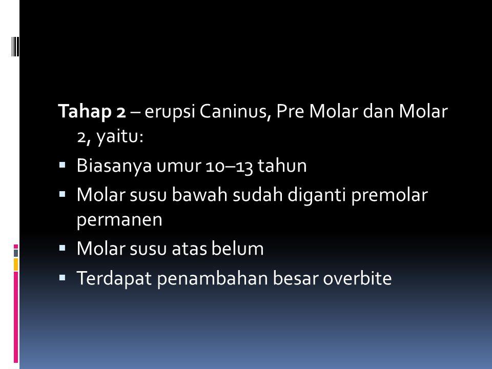 Tahap 2 – erupsi Caninus, Pre Molar dan Molar 2, yaitu: