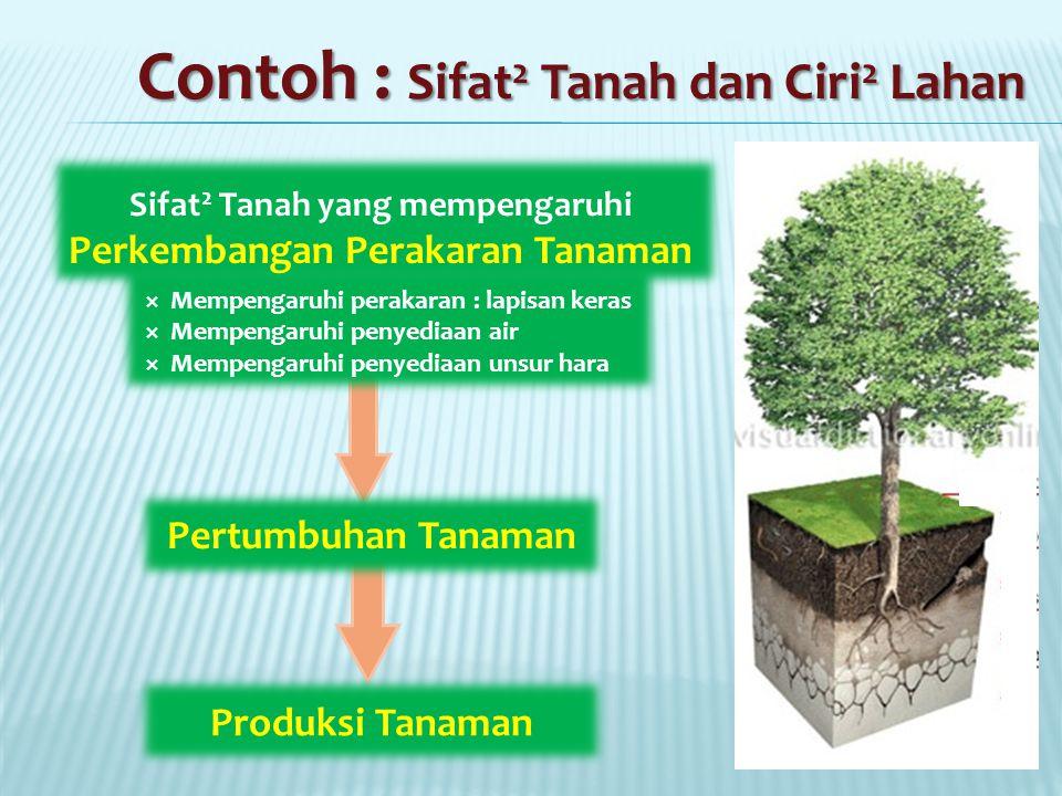 Sifat2 Tanah yang mempengaruhi Perkembangan Perakaran Tanaman