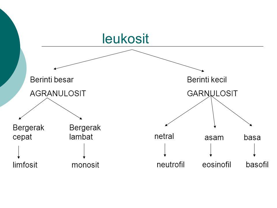 leukosit Berinti besar AGRANULOSIT Berinti kecil GARNULOSIT