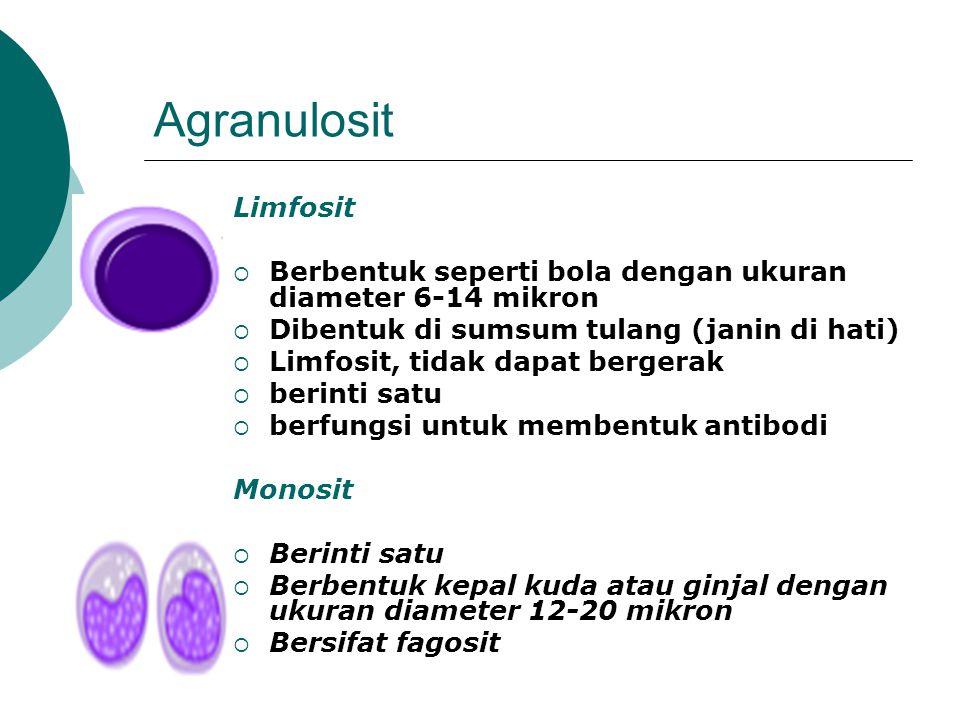 Agranulosit Limfosit. Berbentuk seperti bola dengan ukuran diameter 6-14 mikron. Dibentuk di sumsum tulang (janin di hati)