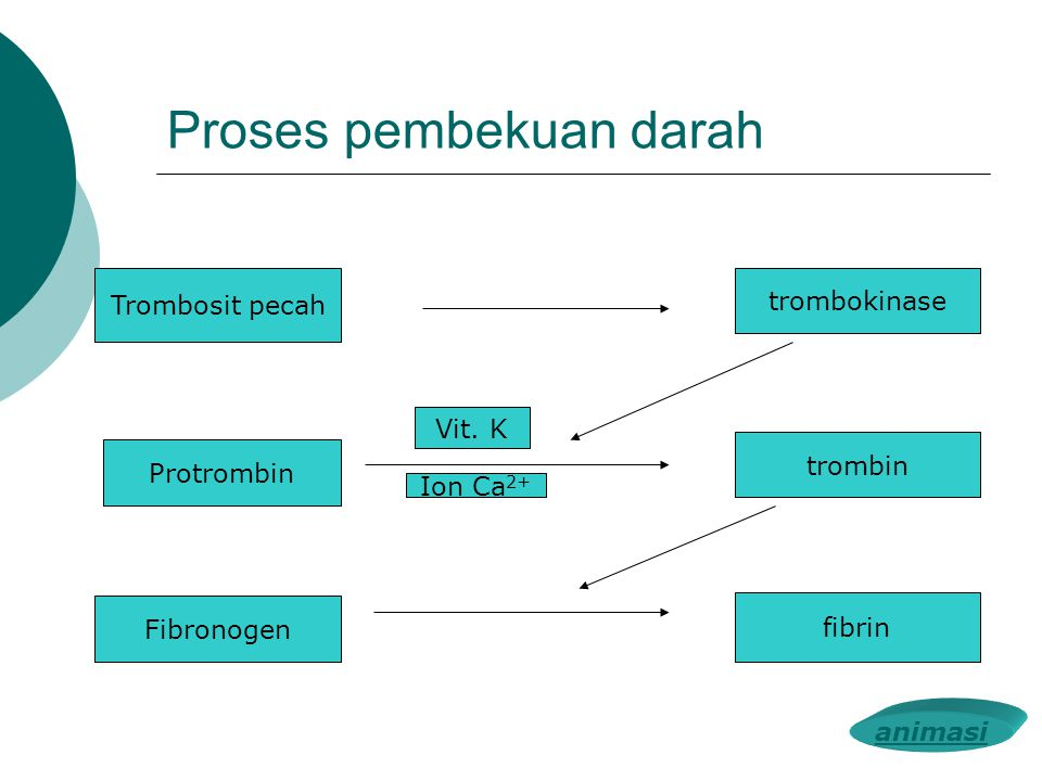 Sistem peredaran darah ppt download proses pembekuan darah ccuart Image collections