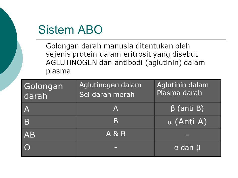 Sistem ABO Golongan darah A B α (Anti A) AB - O α dan β