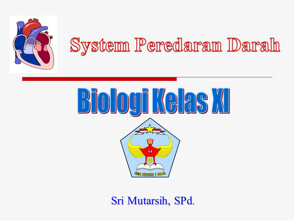 System Peredaran Darah
