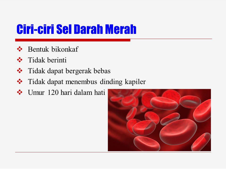 Ciri-ciri Sel Darah Merah
