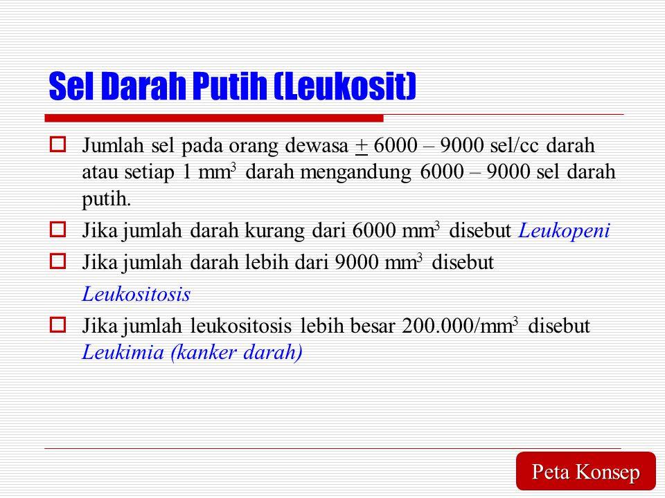 Sel Darah Putih (Leukosit)