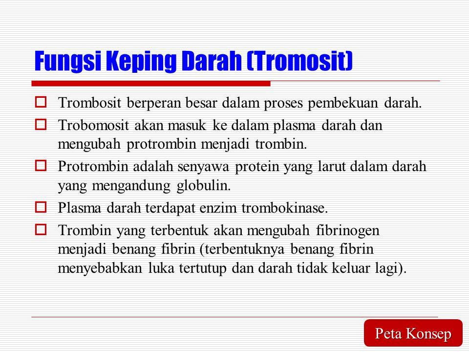 Fungsi Keping Darah (Tromosit)