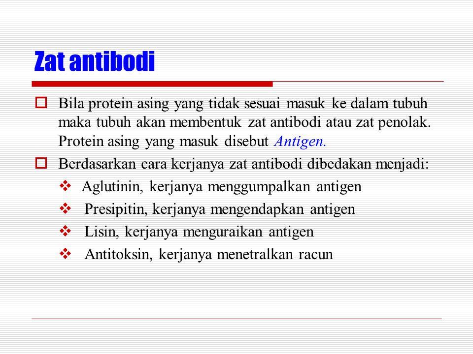 Zat antibodi