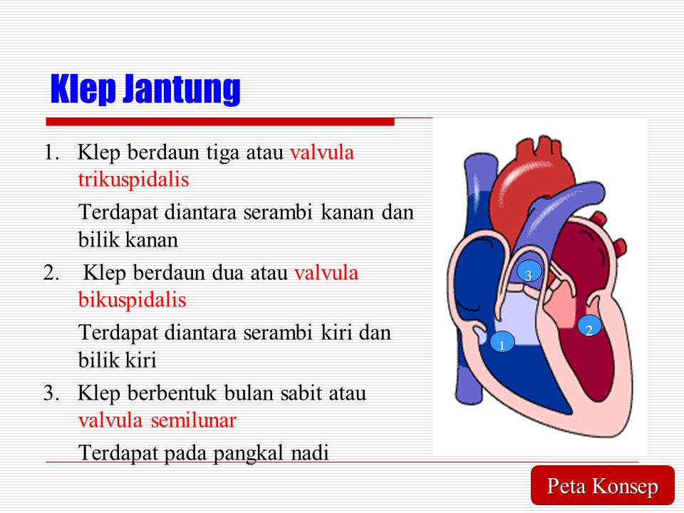 Klep Jantung