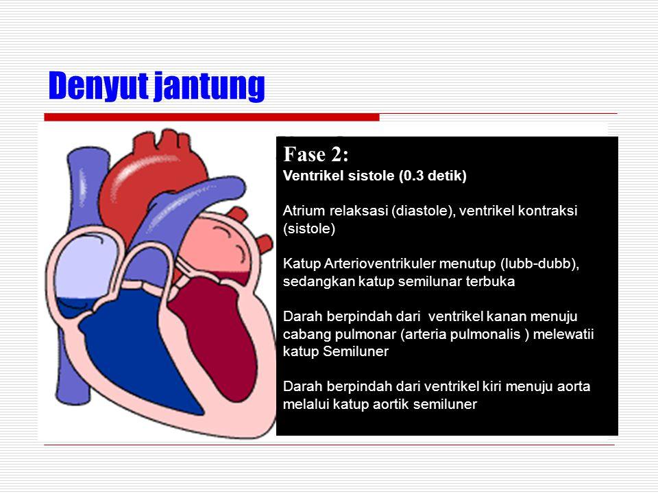 Denyut jantung Fase 2: Ventrikel sistole (0.3 detik)
