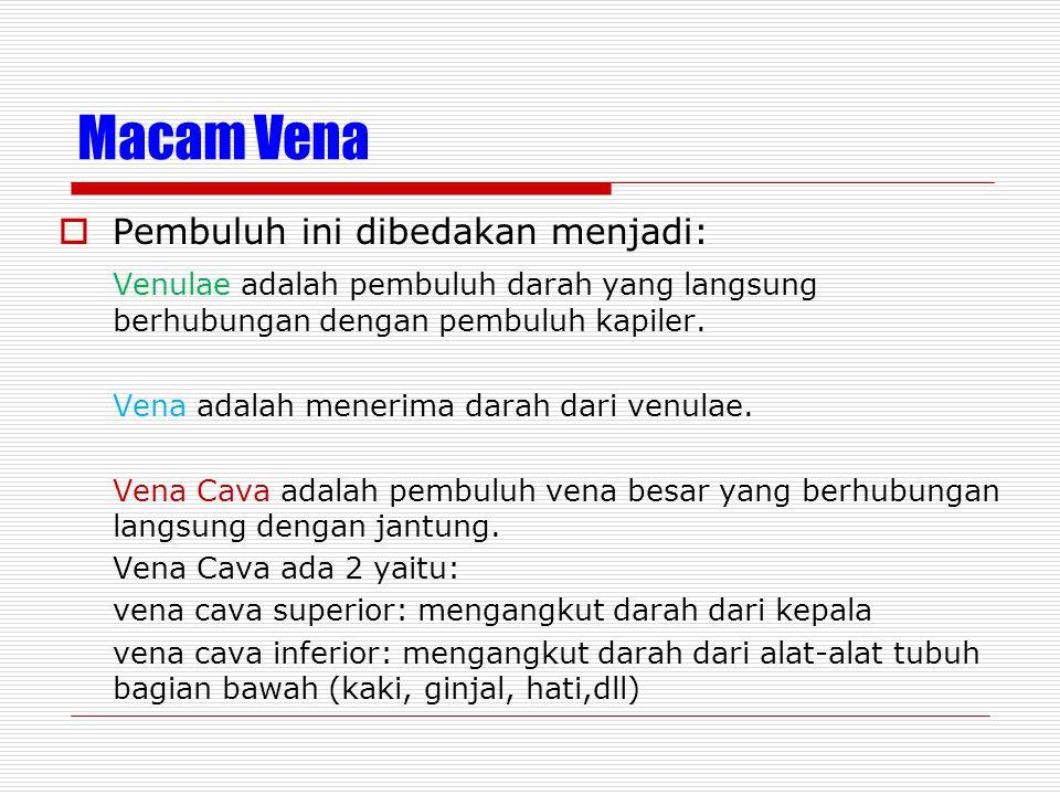 Macam Vena Pembuluh ini dibedakan menjadi: