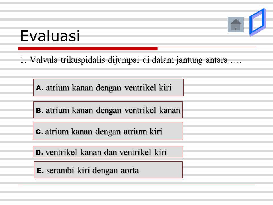 Evaluasi ý. ý. þ. ý. ý. 1. Valvula trikuspidalis dijumpai di dalam jantung antara …. A. atrium kanan dengan ventrikel kiri.