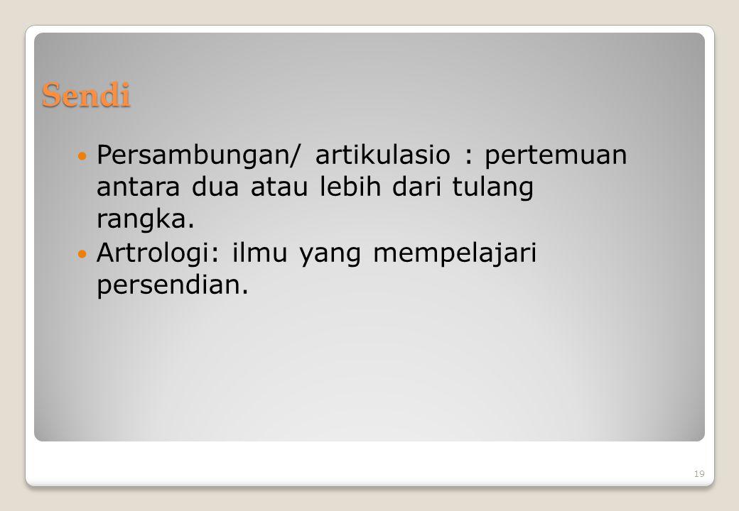 Sendi Persambungan/ artikulasio : pertemuan antara dua atau lebih dari tulang rangka.