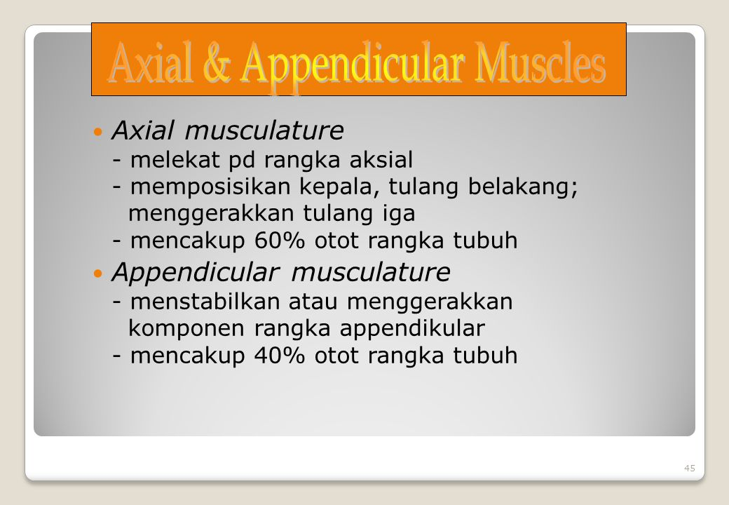 Axial & Appendicular Muscles