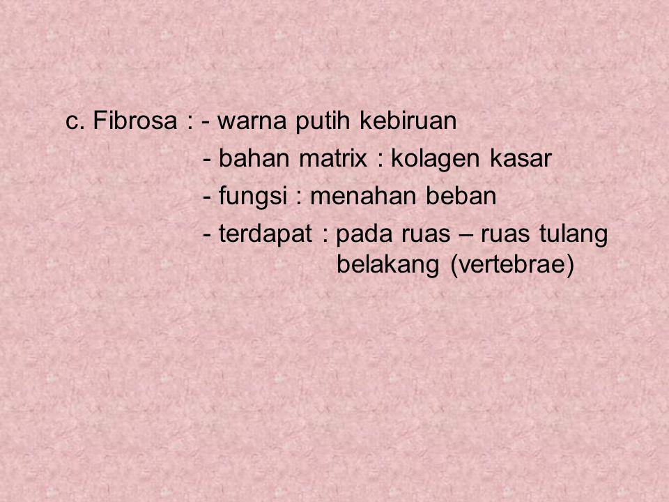 c. Fibrosa : - warna putih kebiruan