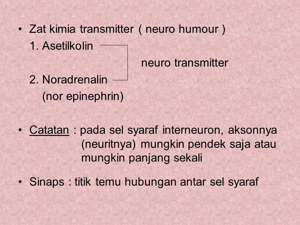 Zat kimia transmitter ( neuro humour )
