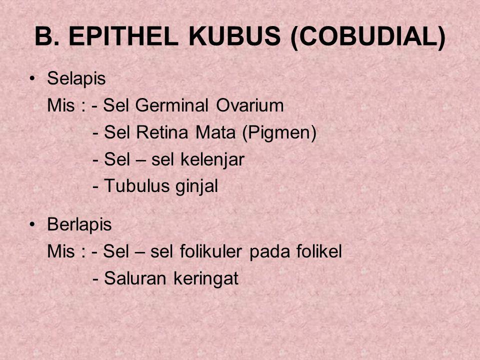 B. EPITHEL KUBUS (COBUDIAL)