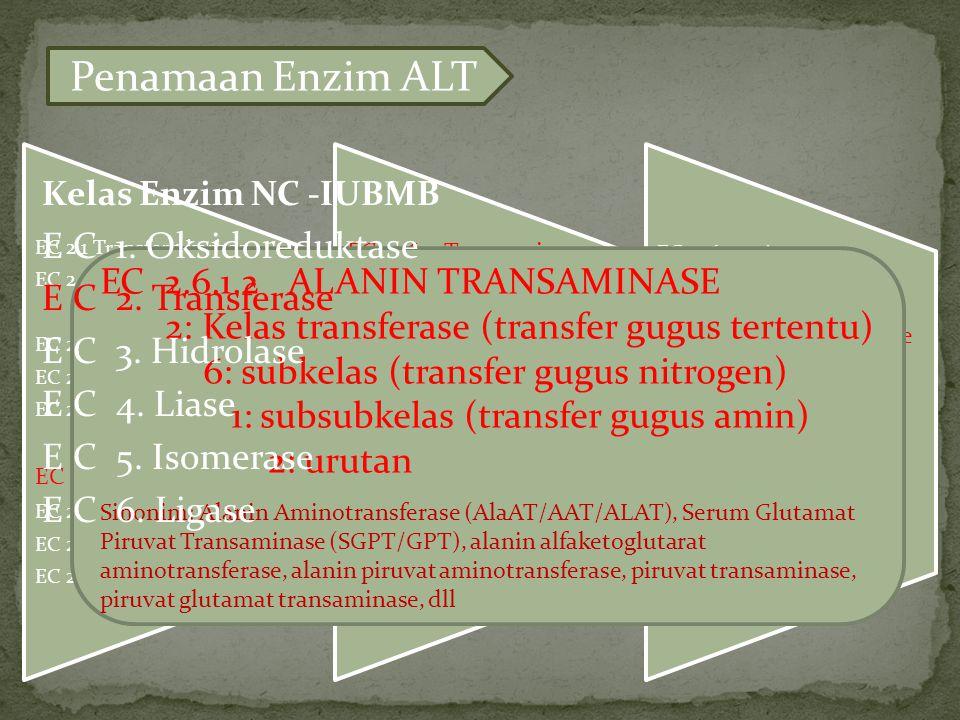 Penamaan Enzim ALT E C 1. Oksidoreduktase E C 2. Transferase