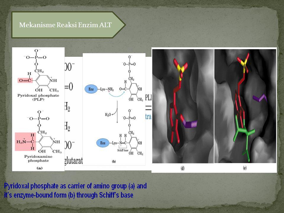 Mekanisme Reaksi Enzim ALT