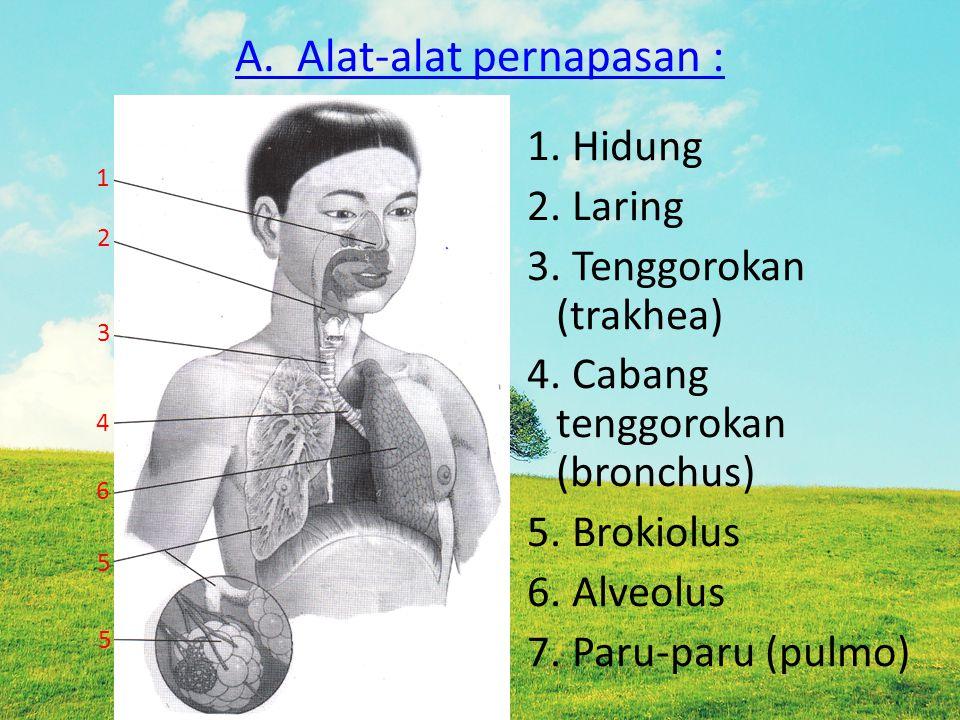 A. Alat-alat pernapasan :
