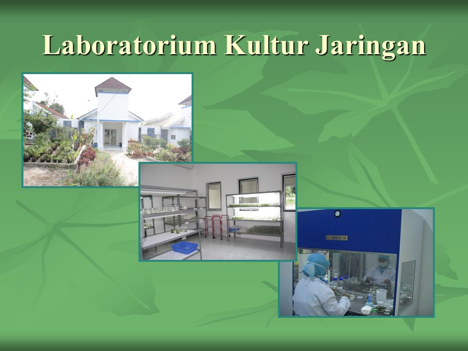 Laboratorium Kultur Jaringan
