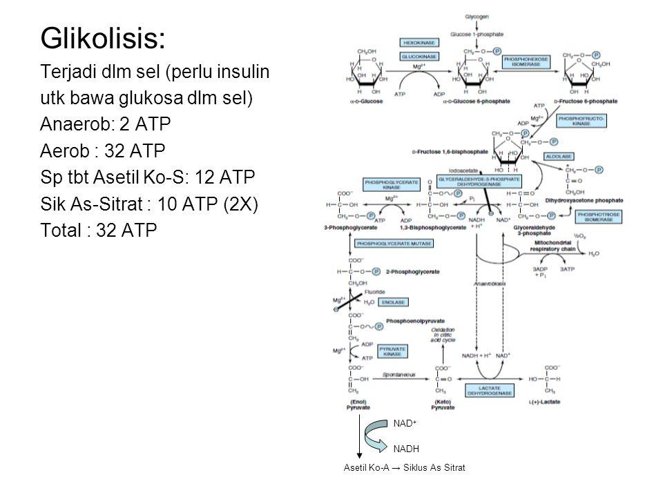 Glikolisis: Terjadi dlm sel (perlu insulin utk bawa glukosa dlm sel)