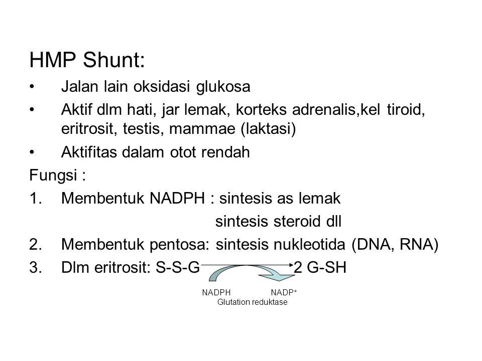 HMP Shunt: Jalan lain oksidasi glukosa