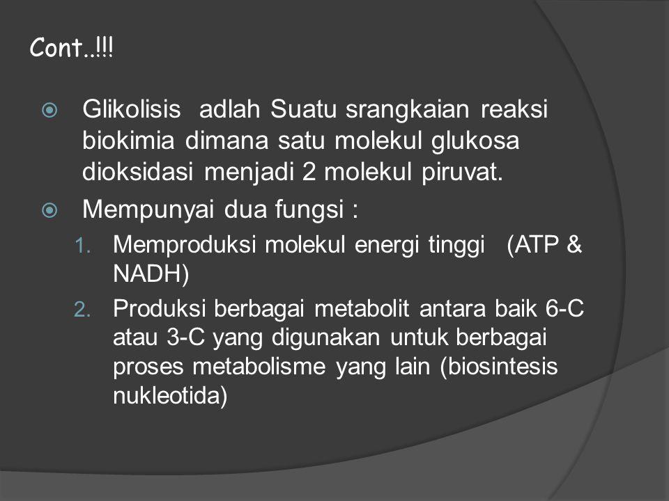 Cont..!!! Glikolisis adlah Suatu srangkaian reaksi biokimia dimana satu molekul glukosa dioksidasi menjadi 2 molekul piruvat.