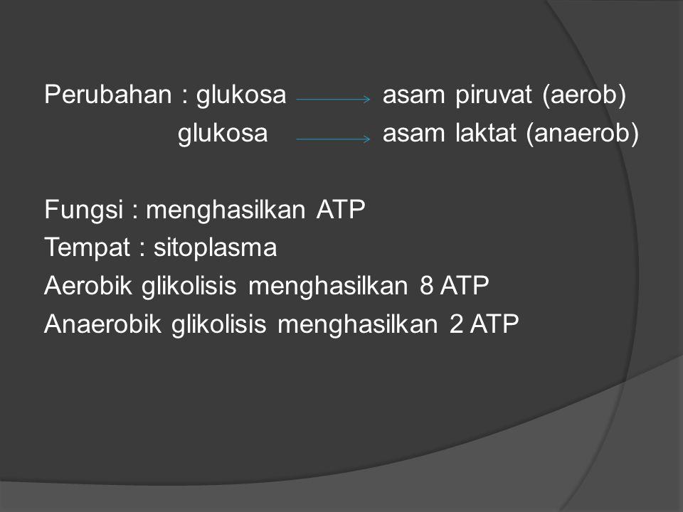 Perubahan : glukosa asam piruvat (aerob)