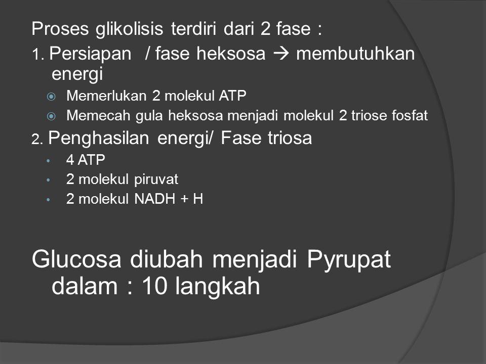 Glucosa diubah menjadi Pyrupat dalam : 10 langkah