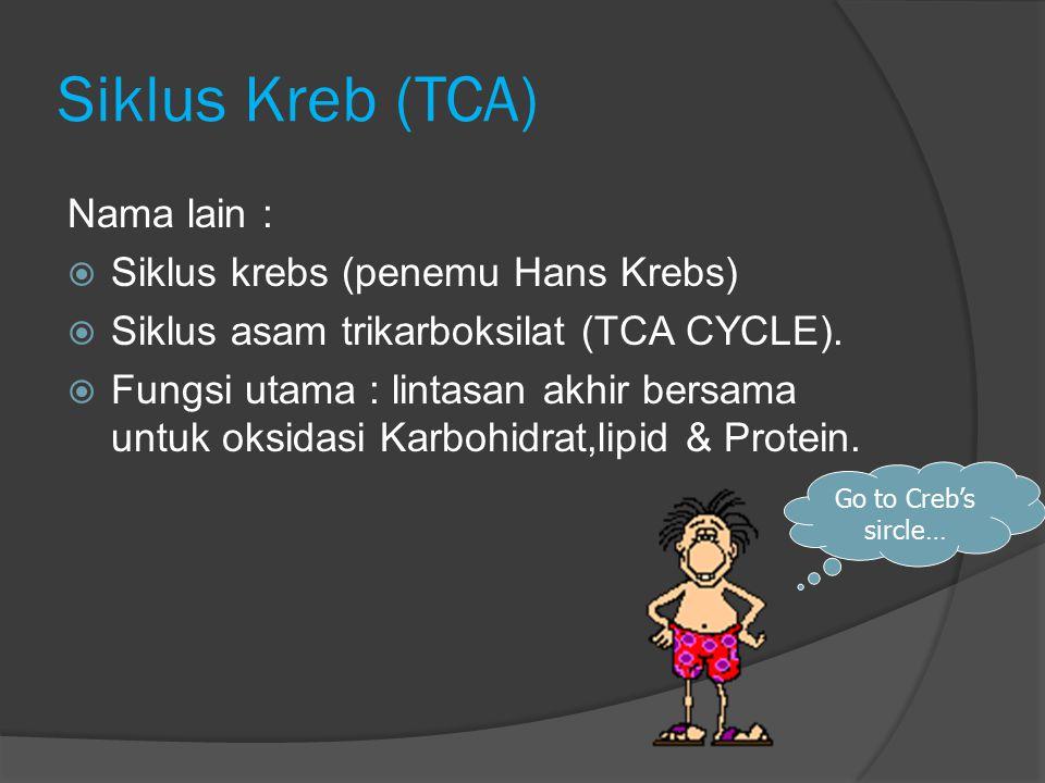 Siklus Kreb (TCA) Nama lain : Siklus krebs (penemu Hans Krebs)