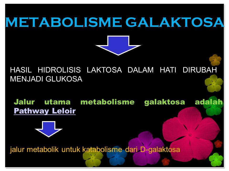 METABOLISME GALAKTOSA