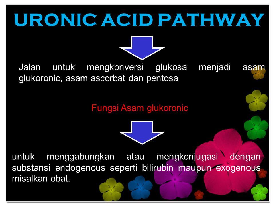 Fungsi Asam glukoronic