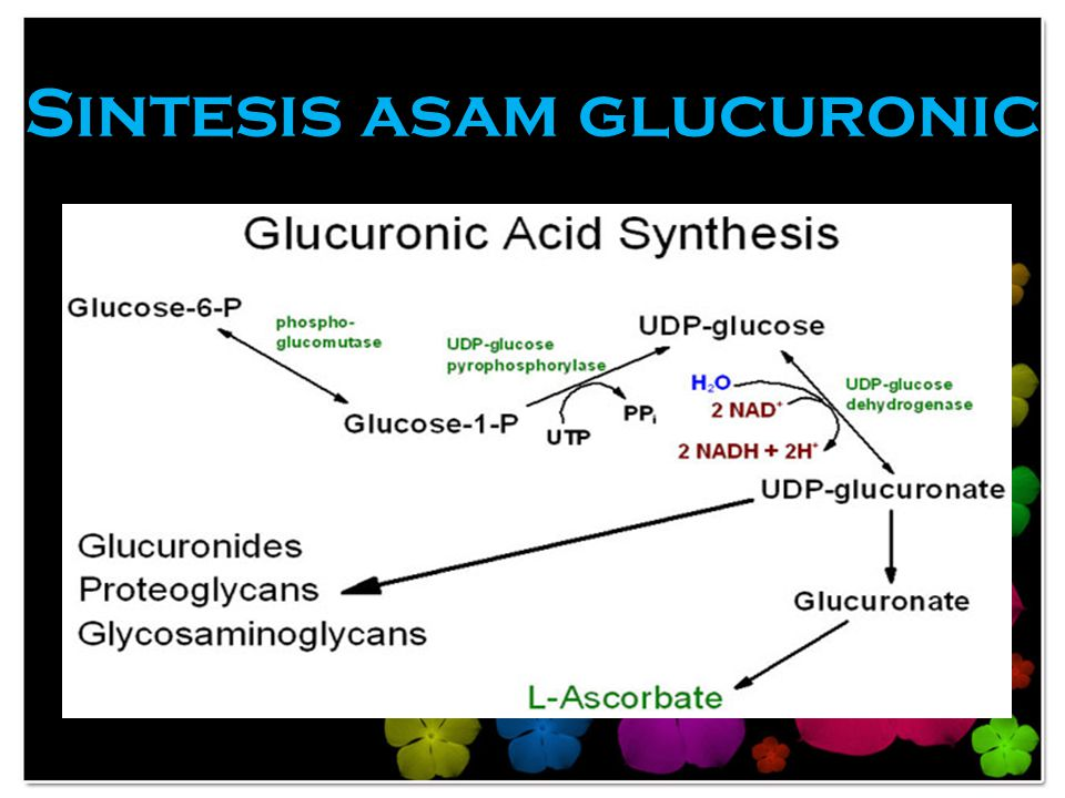 Sintesis asam glucuronic